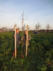 200 Jahre Adolph Kolping - 200 Bäume für Willich